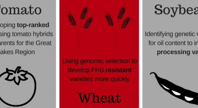 Home   Plant Breeding and Genetics